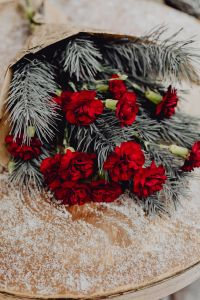 Winter bouquet with red carnations and pine