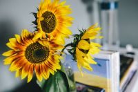 Kaboompics - Sunflowers and books