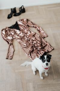 Kaboompics - colored sequin dresses and boots lie on a wooden parquet, White Dog