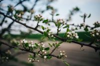 Kaboompics - Close-ups of leaves, flowers and fruit on trees, part 1