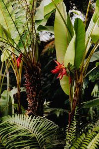 Kaboompics - Palm leaves & red flower in the garden