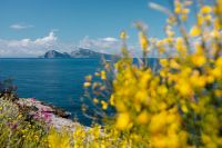 Kaboompics - Yellow wild flowers and view of Capri island (Genista radiata)