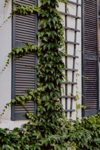 Kaboompics - The building is covered with a climbing vine, 11 Roosevelta Street, Łódź, Poland