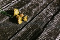 Kaboompics - Yellow flowers on wood