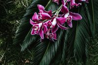 Kaboompics - Tropical arrangement with dendrobium and sago palm