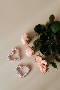 Pink roses & hearts