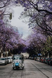 Kaboompics - Purple Jacaranda trees and Tuk Tuk taxi. At Avenida Dom Carlos I, Lisbon, Portugal