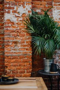 Brick wall and green plant