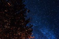 A trees under the starry sky