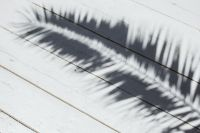 Kaboompics - Palm leaf and shadow