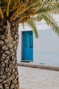 Kaboompics - Palm tree in the city, blue door