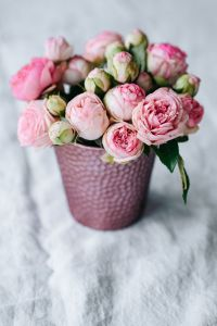 Kaboompics - Pink roses in pot