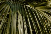 Kaboompics - Palm leaves in the garden