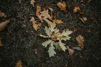 Kaboompics - Autumn leaves on the ground