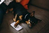 Kaboompics - Puppy sleeping with iPhone 6