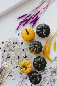 Small yellow and dark green pumpkins on a white background