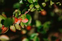 Kaboompics - Close-ups of leaves, flowers and fruit on trees, part 2