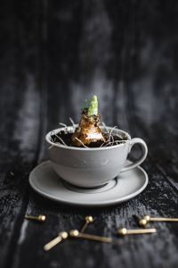 Kaboompics - Little seedling in a cup with small golden pins on a wooden board