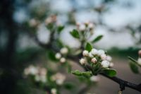 Kaboompics - Close-ups of flowers, leaves and fruit on branches