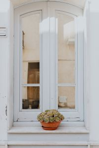 A cactus in a pot on a window sill