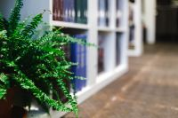 Kaboompics - Fern in a bookstore