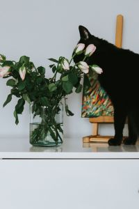 Kaboompics - Black cat with flowers and a painting
