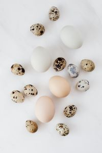 Kaboompics - Quail's eggs and chicken eggs