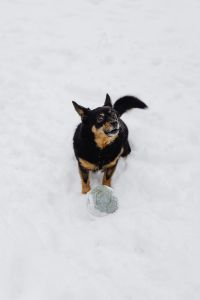Kaboompics - Dog in the snow