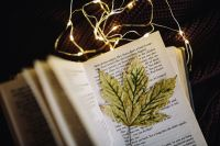 Kaboompics - Leaf, book, fairy lights