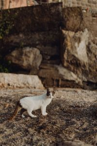 Kaboompics - Cats from Sorrento, Italy