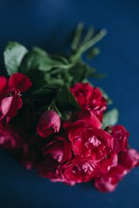 Bucket of red roses