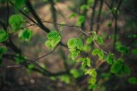 Kaboompics - Little green leaves on branches