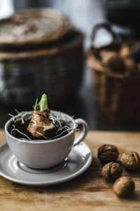Kaboompics - Little seedling in a cup with walnuts on a wooden board
