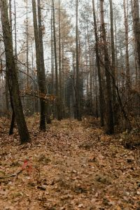 Kaboompics - Autumn walk to the forest in foggy weather