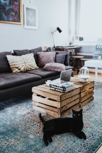Kaboompics - Designer living room interior with a black cat