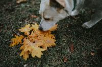 Dog with yellow leaves