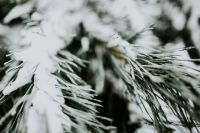 Kaboompics - Close-ups of snowy trees