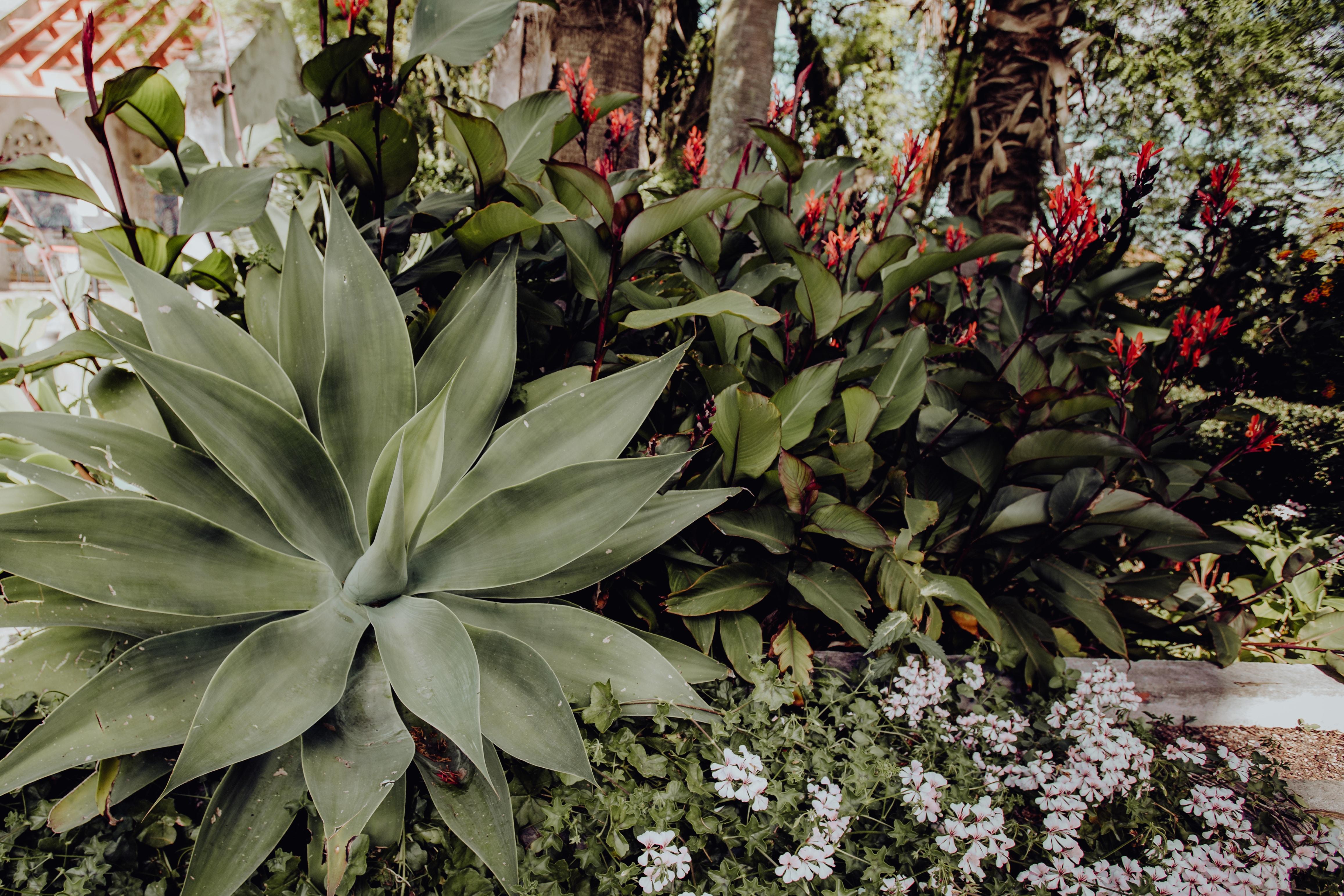 Tropical Botanical Garden in Belem, Lisbon, Portugal