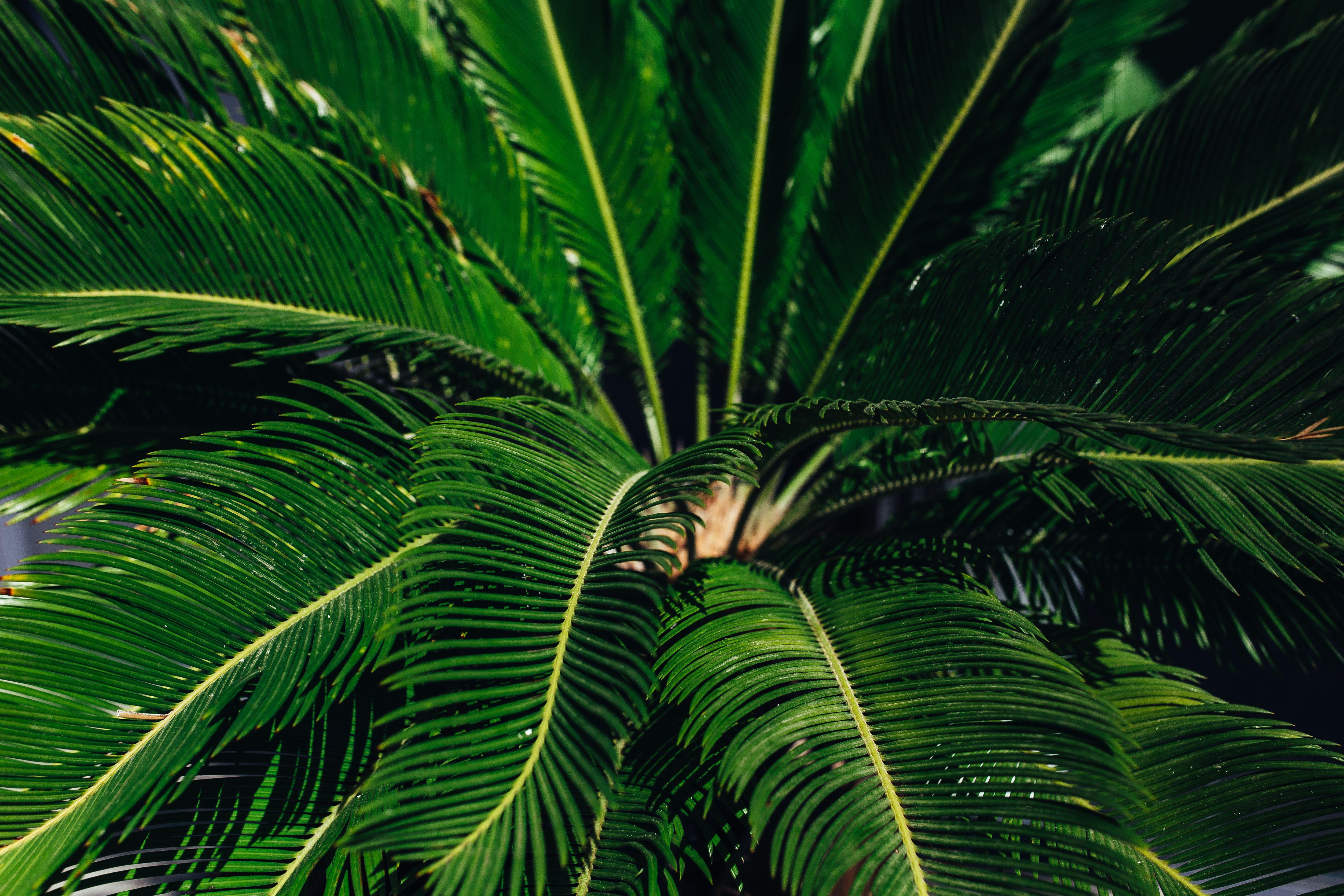 Free stock photos of nature - Kaboompics