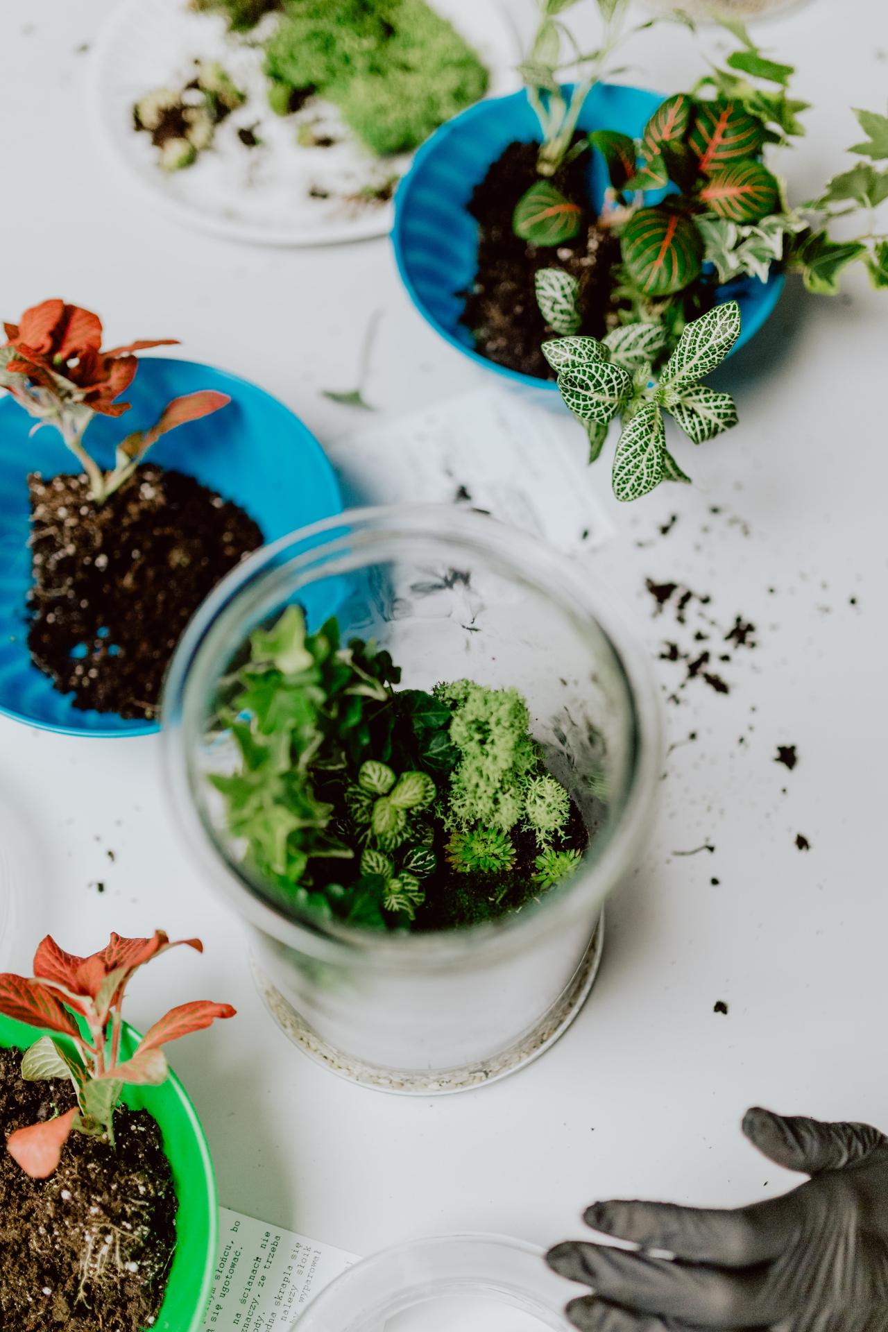 Free Stock Photos Of Nature Kaboompics